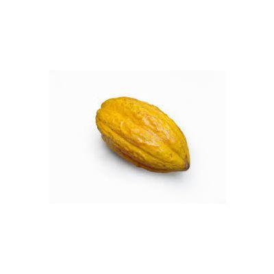 Cocoa Bean | Raw Fruit