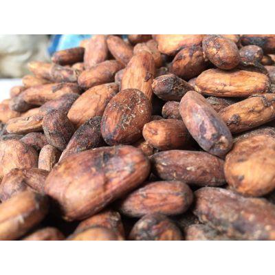 Cocoa Bean - Wholesale | Premium (Standard) beans | Grade-1